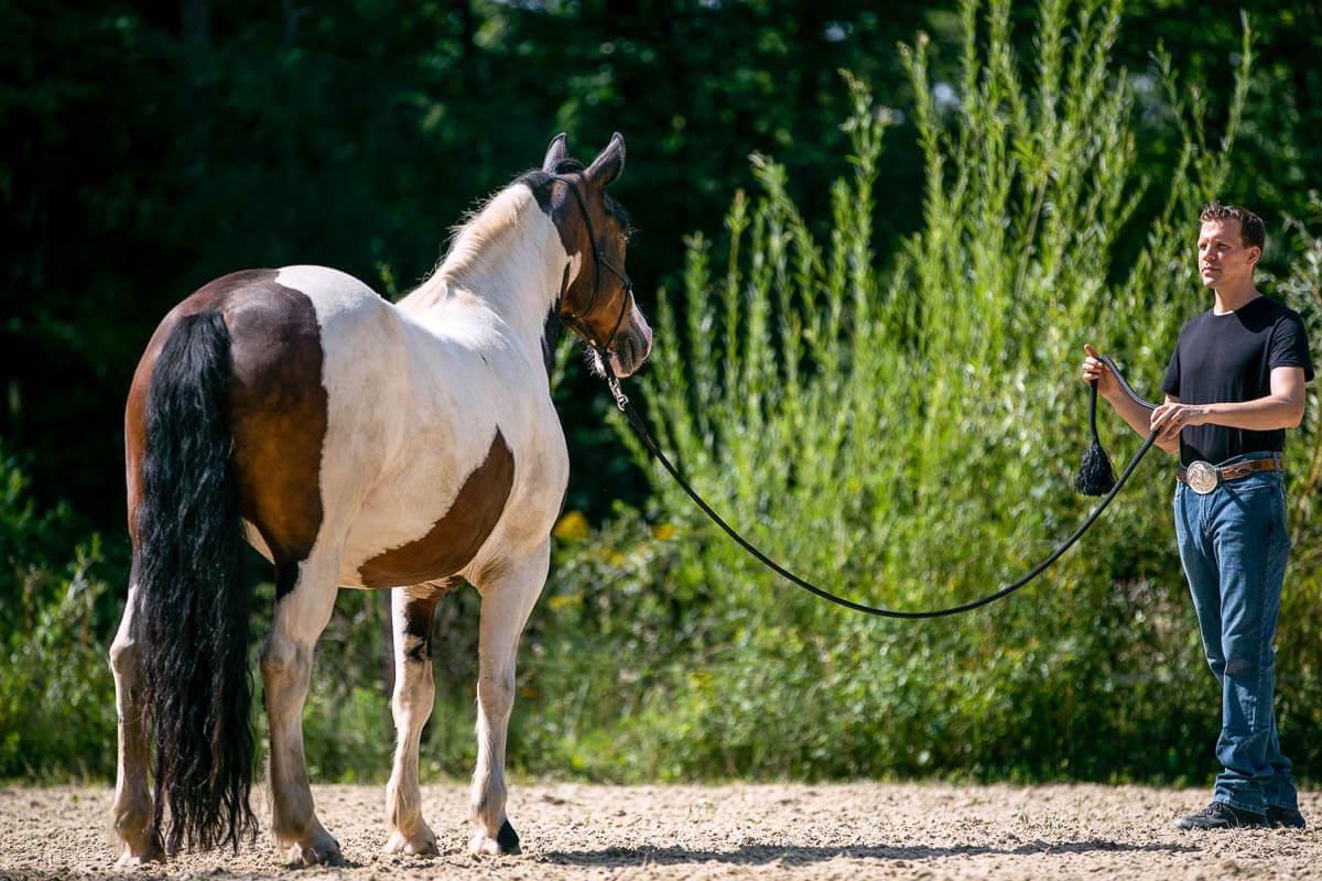 Ein geschecktes Pferd beobachtet Florian aufmerksam, der sich vor ihm aufgerichtet hat.