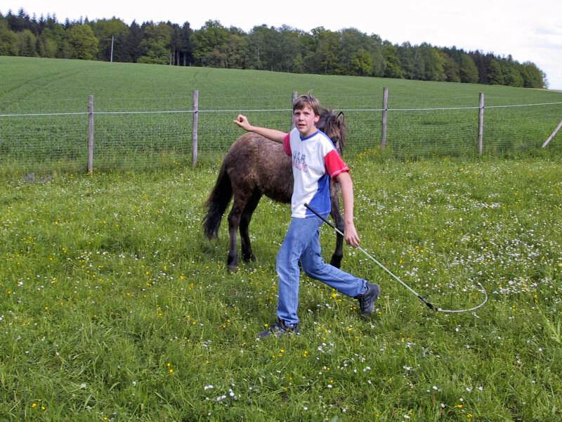 Florian Oberparleiter im Alter von 12 Jahren bei der Bodenarbeit mit seinem Kleinpferd Sveni